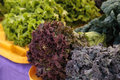 Purple and green romaine lettuce and kale Royalty Free Stock Photo