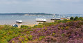 Purple Heather With View To Br...