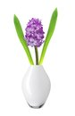 Purple hyacinth in vase isolated on white background Stock Photography