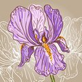Purple iris hand drawn illustration of a Stock Image