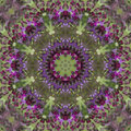 Purple ironweed kaleidoscope vernonia gigantea this is a beautiful wildflower image these flowers are called by several names tall Royalty Free Stock Images