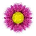 Purple kaleidoscopic daisy flower mandala isolated on white with yellow center background Royalty Free Stock Photos