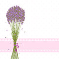 Purple Lavender Flower Greeting Card Stock Photography