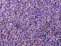 Purple lavender romantic flowers background Stock Photos