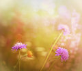 Purple meadow flowers Stock Photos
