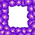 Purple Morning Glory Flower Border. Vector Illustration Royalty Free Stock Photo