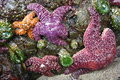 Purple And Orange Starfish On ...