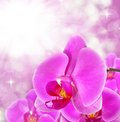 Purple orchid beautiful close up Stock Photography