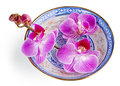 Purple orchid in a chinese bowl Royalty Free Stock Photo