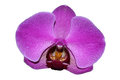 Purple Orchid. Clipart on a white background.
