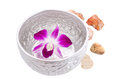 Purple orchid floating in the bowl Stock Image
