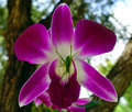 purple orchid flower Royalty Free Stock Photo