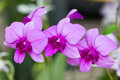 Purple orchid flowers macro shot Stock Image