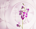 Purple orchid flowers on pink floral background Royalty Free Stock Photo