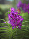Purple orchid flowers  with shallow depth Stock Photography