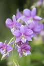 Purple orchid flowers  with shallow depth Royalty Free Stock Photography