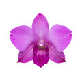 Purple orchid isolated on white with clipping path Stock Photo
