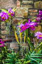 Purple orchids with cultured stone background Royalty Free Stock Photography