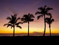 Purple Palms Sunset Stock Photography