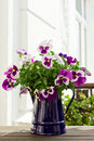 Purple pansies in blue jug bouquet of and white a enamel Stock Photo