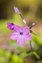 Purple Phlox Wildflower in Smoky Mountains Tennessee Vertical Royalty Free Stock Photo