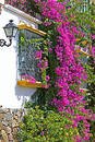 Purple or pink bouganvilla on side of house Royalty Free Stock Photo