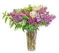 Purple pink and white syringa vulgaris in a transparent vase lilac or common lilac flowers close up white background Stock Photo