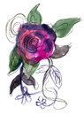 Purple Rose painted in watercolor Stock Photos