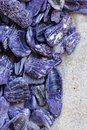 Purple seashell cluster in sand Royalty Free Stock Photo