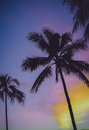 Purple Sky Vintage Palm Trees In Hawaii Royalty Free Stock Photo