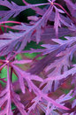 Purple tree leaves over green background Royalty Free Stock Photos