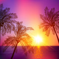 Purple tropical sunset with palms silhouettes vector illustration Stock Photo