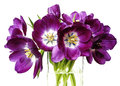 Purple tulips in a glass vase Royalty Free Stock Photography