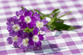 Purple verbena flower on a plaid background Royalty Free Stock Photo