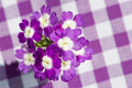 Purple verbena flower on a plaid background Stock Image
