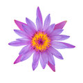 Purple water lily isolated Royalty Free Stock Photo
