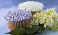 Purple and white cupcakes with hydrangea horizontal Royalty Free Stock Images