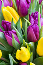 Purple and yellow tulip bouquet. More tulip on the grey backgrou