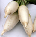 Pusa shuka radish raphanus sativus cultivar developed at iari with medium sized root conical shaped suddenly tapered at lower end Royalty Free Stock Photography
