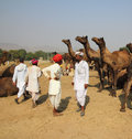 Pushkar Camel Fair - sellers of camels during festival Stock Photo