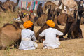 Pushkar Camel Mela (Pushkar Camel Fair) Stock Photo