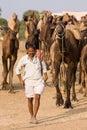 Pushkar fair pushkar camel mela rajasthan india november on november in this is the largest Royalty Free Stock Images