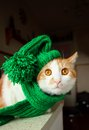 Puss in green hat with pompons and scarf Royalty Free Stock Photography