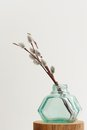 Pussy willow twigs in green glass jar vase on white background Royalty Free Stock Photo
