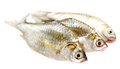 Puti fish over white background Stock Photos