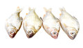 Puti fish over white background Royalty Free Stock Photo