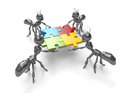 Putting the pieces together jigsaw puzzle d cartoon black ants team work concept Stock Images