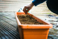 Putting seeds in flowerpot hand Royalty Free Stock Image