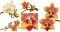 Puzzle of orchid orchids indoor plants Stock Image