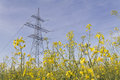 Pylon in rape field yellow Royalty Free Stock Images